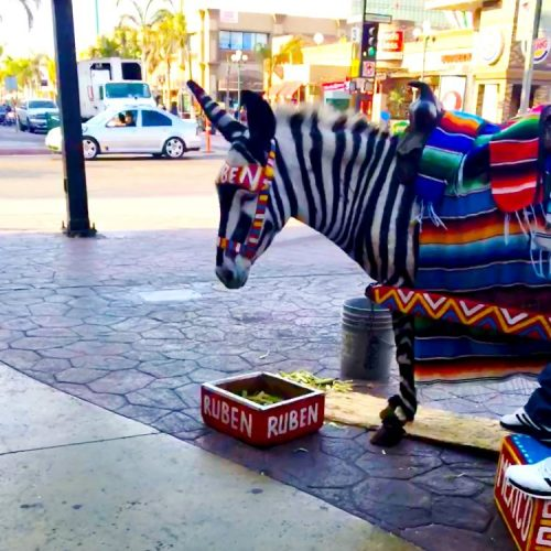 Donkey in Tijuana